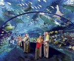 In the tunnel surrounded by sharks at Ripley's Aquarium of the Smokies