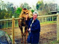 Camels at the Smoky Mountain Deer Farm