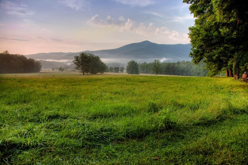 Top 5 Cades Cove Hiking Trails for Your Smoky Mountain Vacation