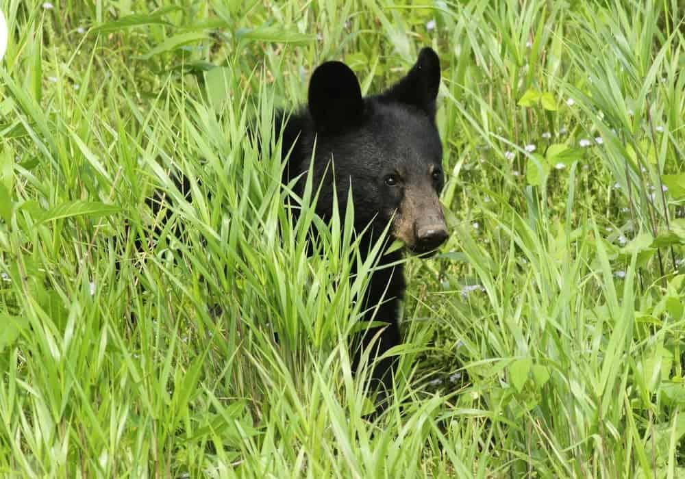 5 Gatlinburg Activities For Animal Lovers