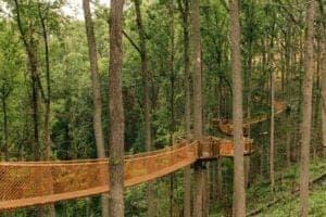 anakeesta tree top canopy