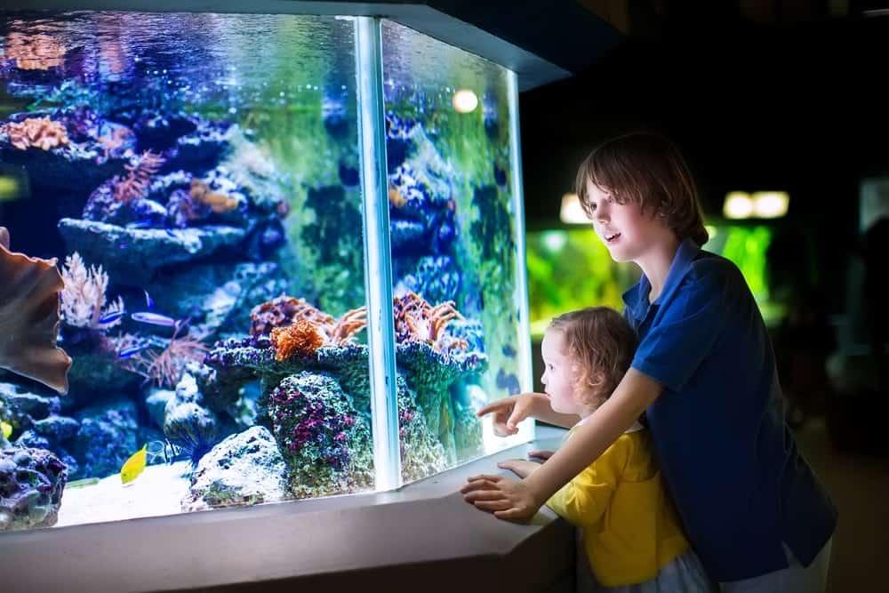 kids-enjoying-aquarium