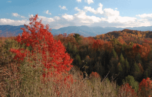 smoky mountains fall